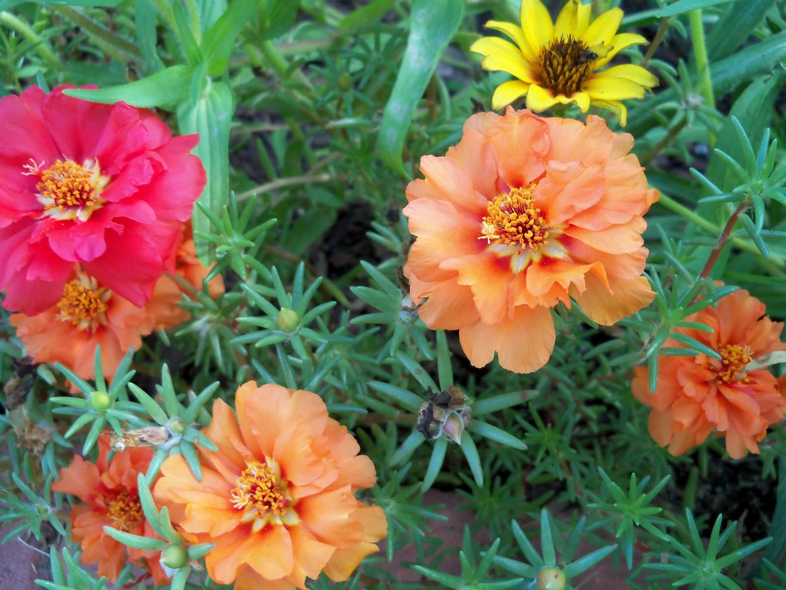 Gardening 2010, Part Three - 101_3695.JPG
