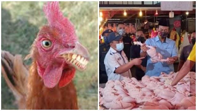 Kebanyakkan setuju harga ayam dijual pada harga RM 9.50 sekilo