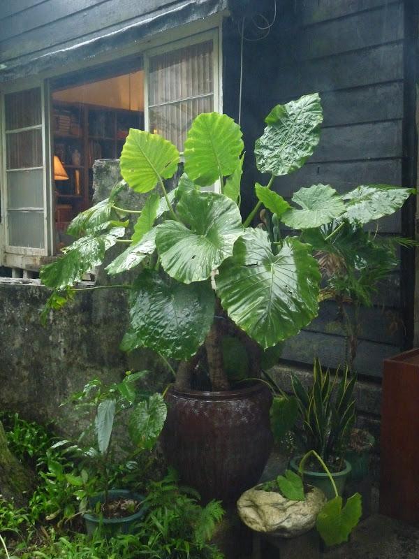 TAIWAN.Shen Keng , dans la banlieue de Taipei - P1100021.JPG