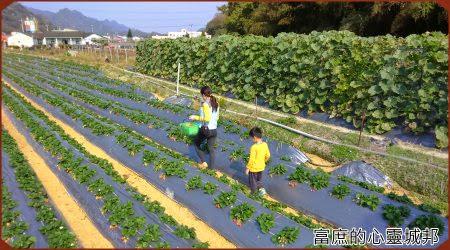 大湖草莓園