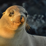 galapagos - Galapagos_FB-164.jpg