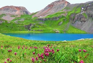 Photo: Rosy Indian Paintbrush wild flowers