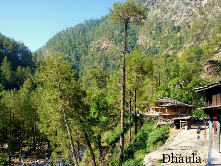 Dhaula - the base camp. You camp amidst pines next to the fast flowing Rupin river