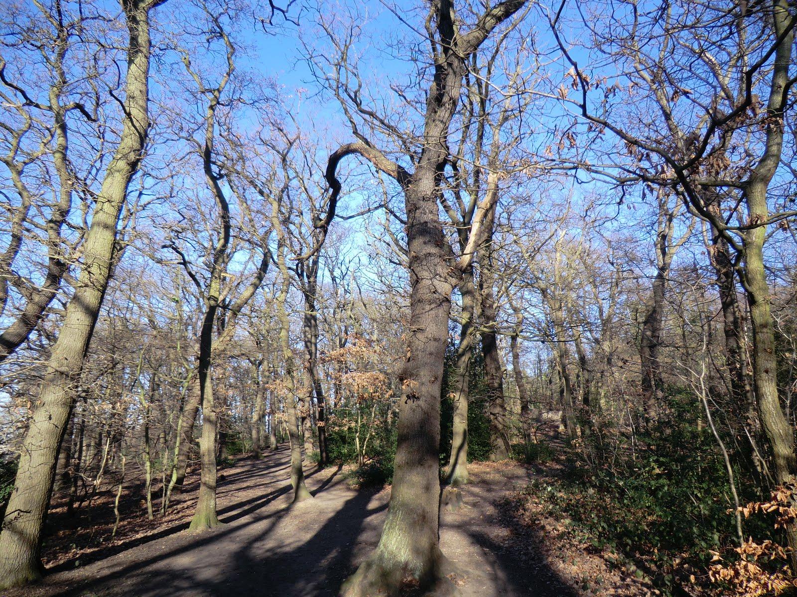 CIMG1608 Dulwich Wood in winter