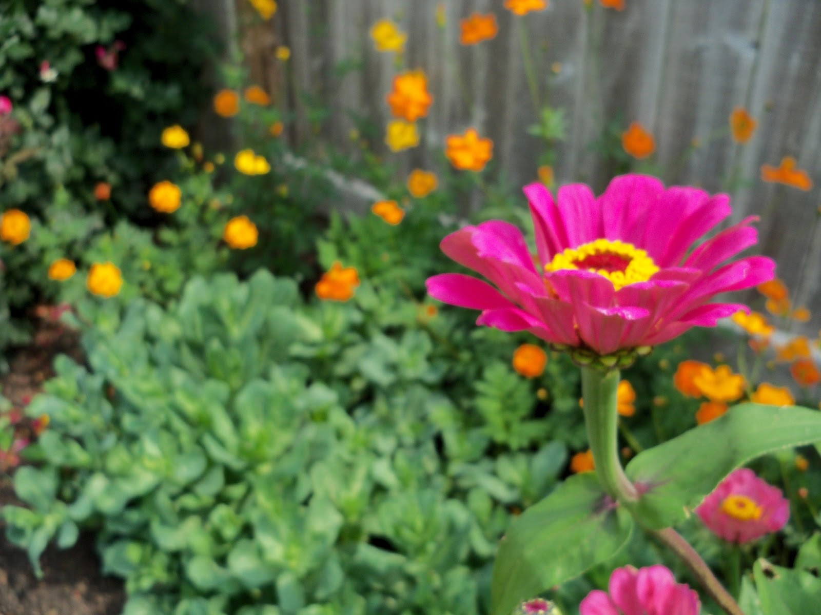 Gardening 2011 - 100_8684.JPG