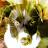 Robert Dowson avatar image