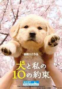 10 Lời hứa với chú chó của tôi