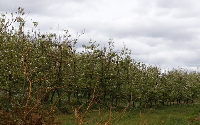 Blumenau - Fraiburgo  Apfelplantage