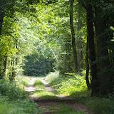 La Forêt de Dreux. Les Hautes-Lisières (Rouvres, 28), 13 juin 2011. Photo : J.-M. Gayman