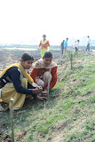 College students plant trees.