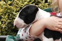 LOVE CHARM Ex Se Natus ( male 5 weeks old )