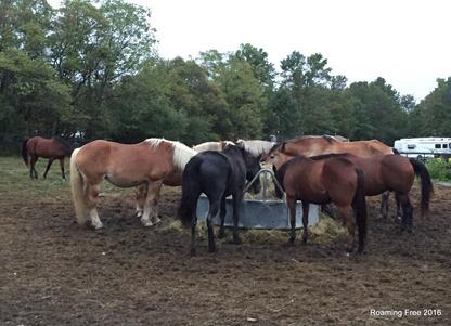 Horses at dinner