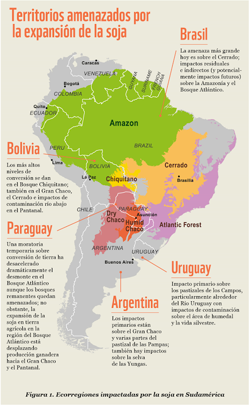 Environmental impact of soy agriculture in South America. Graphic: WWF