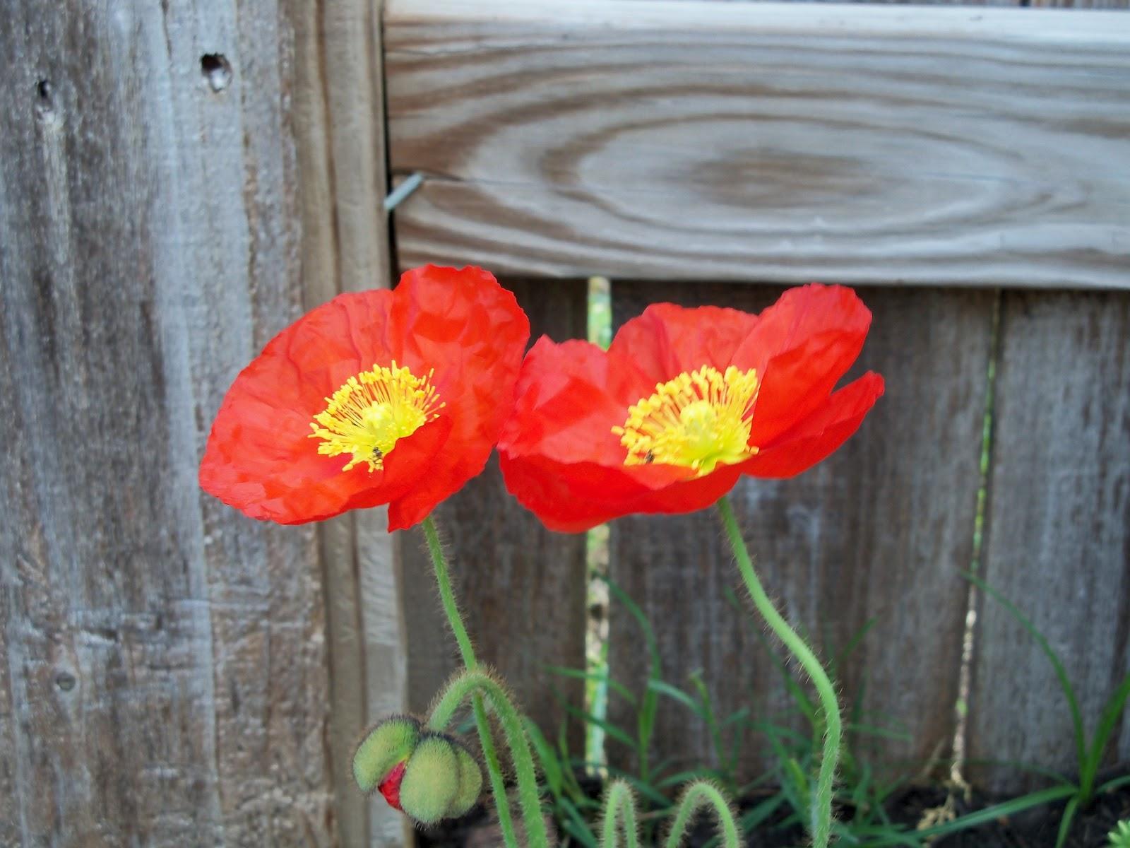 Gardening 2011 - 100_7081.JPG