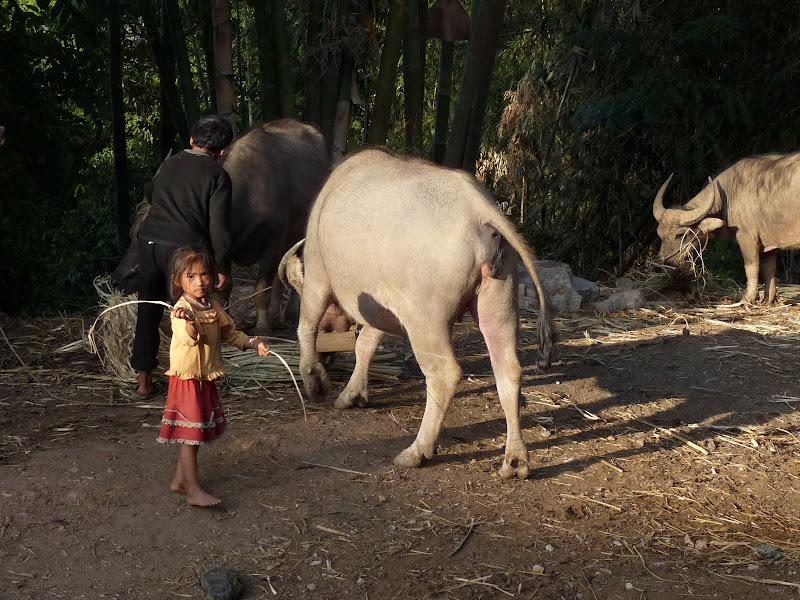Chine: randonnée xishangbanna, région de Bada - Picture%2B897.jpg