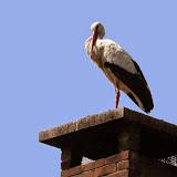 Vogels en dieren - IMG_7250.JPG