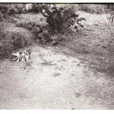 n010-019-1966-tabor-sikfokut.jpg