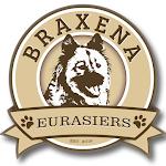 Braxena Eurasiers