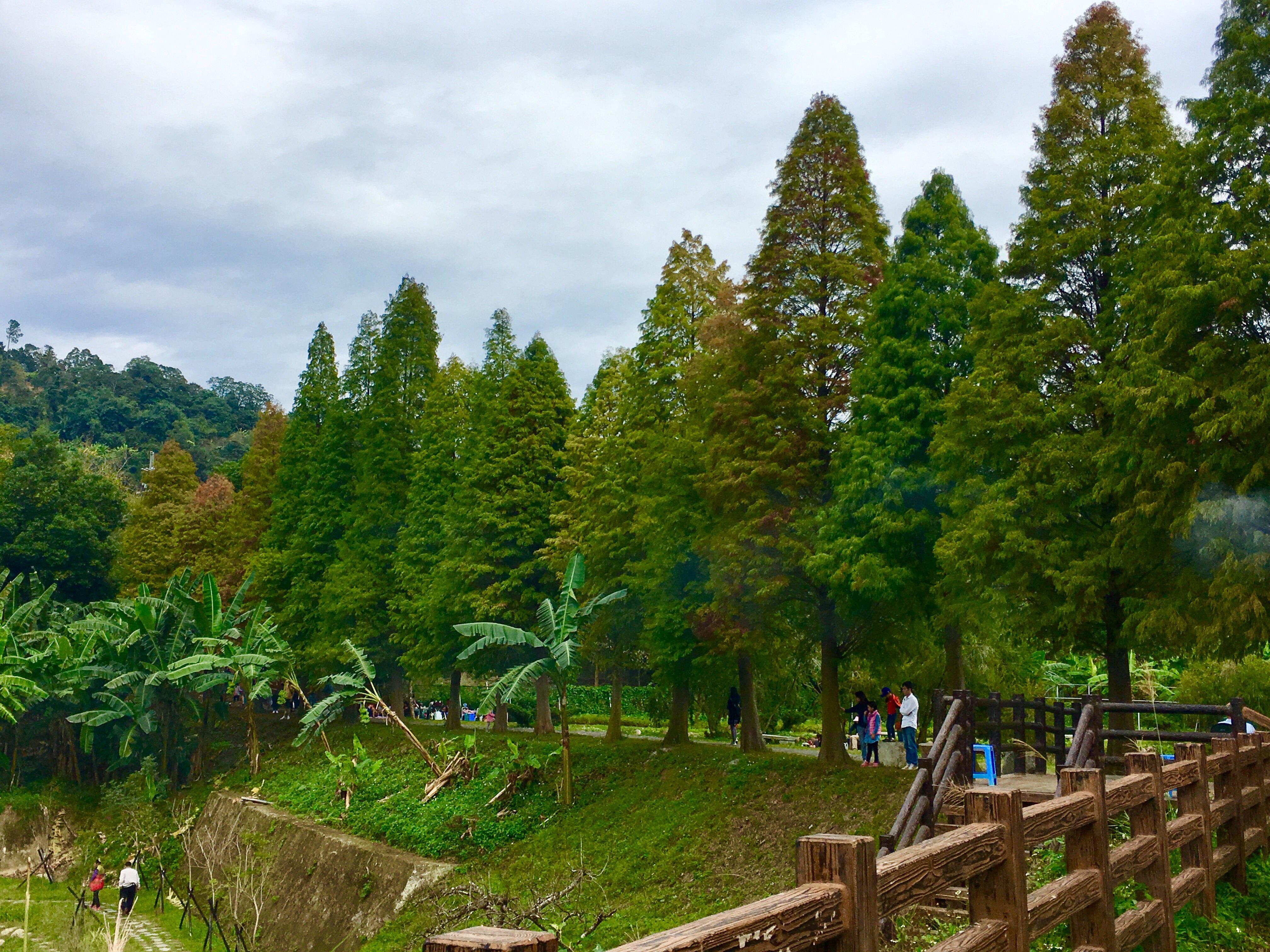 beipu liutang bald cypress trees hsinchu Taiwan