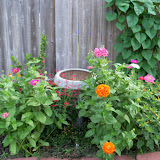 Gardening 2011 - 100_8193.JPG