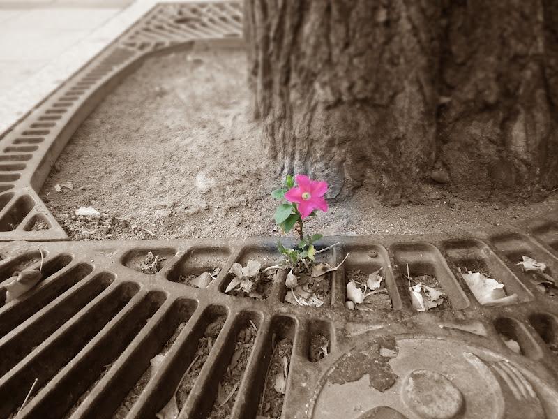 거리에 핀 꽃
