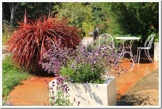 160813_UCSC_Arboretum_220