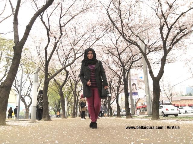 TAMAN SAKURA, DI KOREA, Suseong Lake Daegu