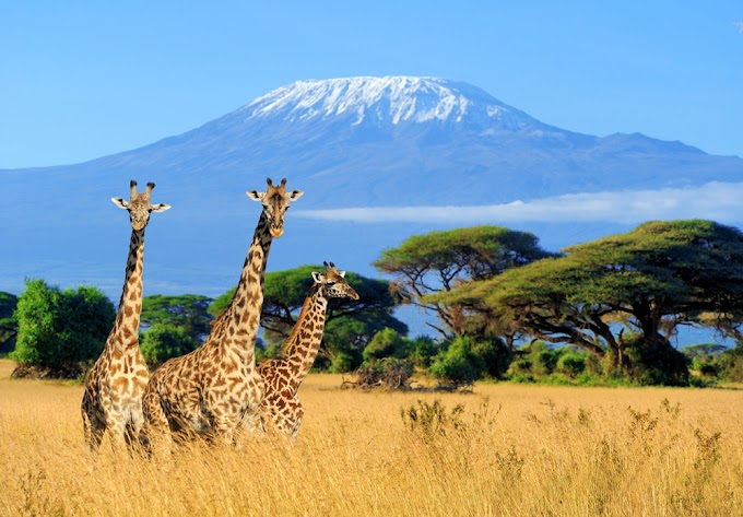 The Best Places To Visit in Africa (and What to Do There)