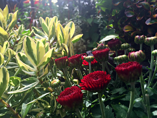 Late summer blooms at Ravenna Gardens, University Village, Seattle.