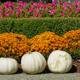 10-26-14 Dallas Arboretum - _IGP4271.JPG