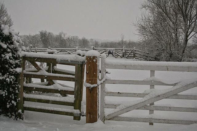 Woodhurst In the Snow - February 2009 - picture27.jpg