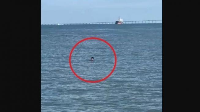 Wilayahnya Lockdown, Pria Rela Berenang Seberangi Selat Demi Jumpa Teman