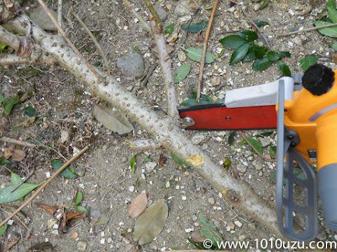 引っ掛けフックで小枝もブレずに切断