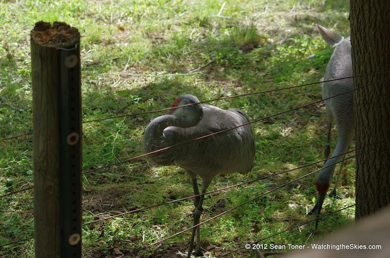 05-11-12 Wildlife Prairie State Park IL - IMGP1595.JPG