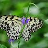 005-vlinder_1.jpg