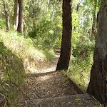 Bush steps near Rocky-high view point (389933)