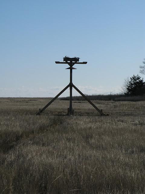 Osprey Platform - Jan 15, 2012 - IMG_8634.JPG