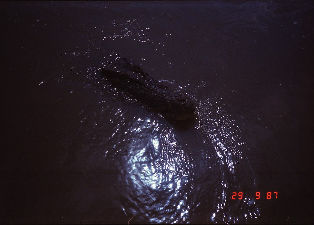 5940Adelaide River Croc Tour