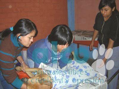 campaña esterilizacion VES 2008 (13)
