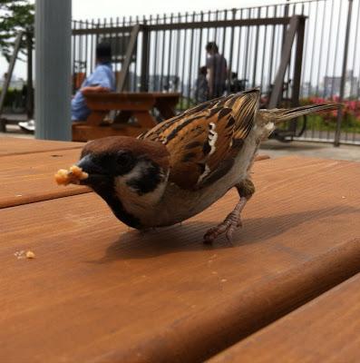 都市農業公園, 2 Chome-44 Shikahama, Adachi, Tokyo 123-0864, Japan