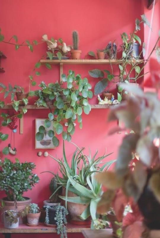 parete_rosso_geranio