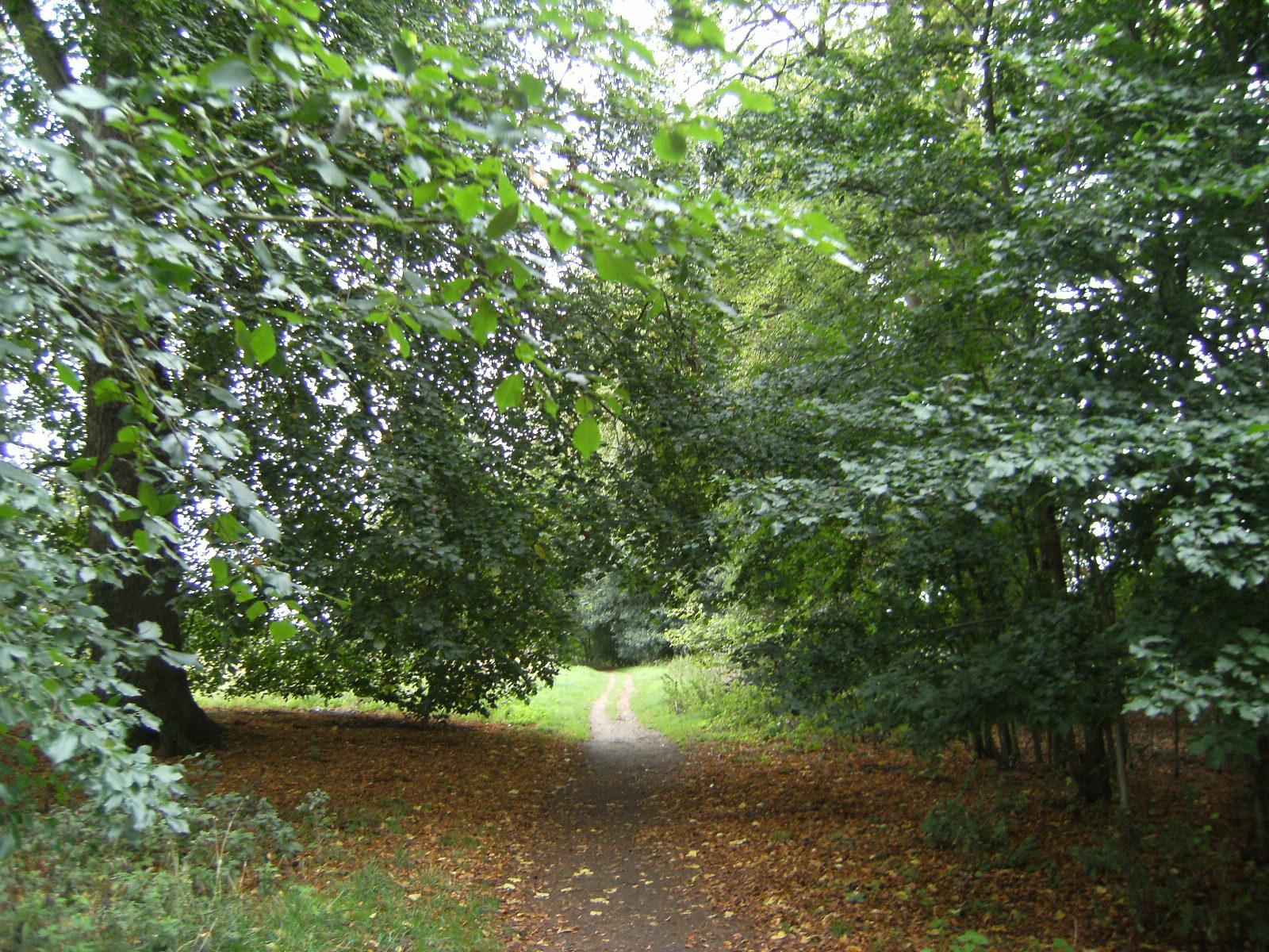 DSCF9351 Audley Park