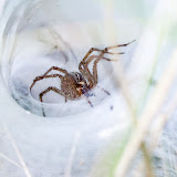 spider_MG_8759-copy.jpg