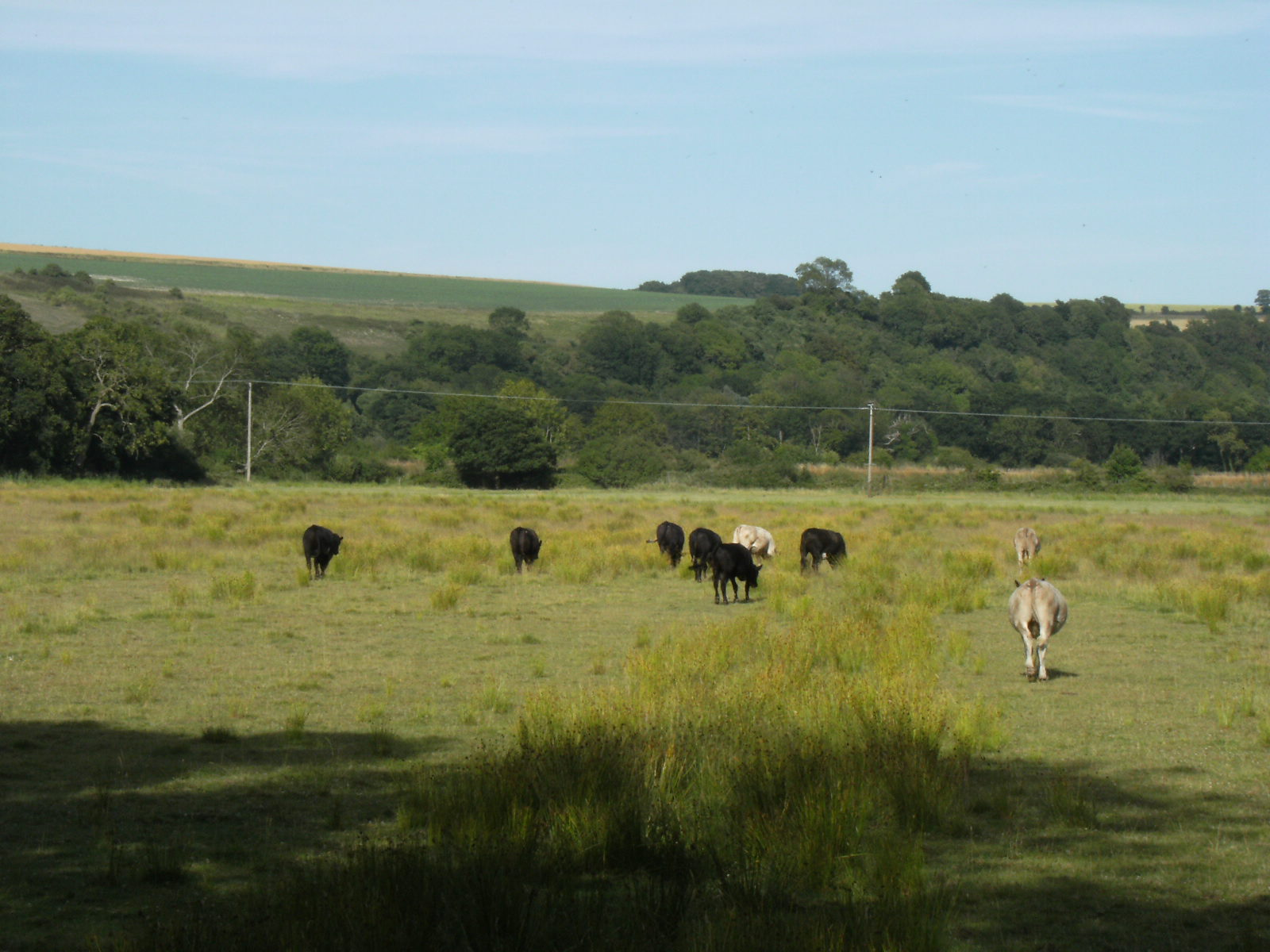 1007190181 Water meadows between North Stoke and South Stoke