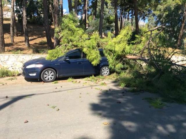 Δέντρο έπεσε σε αυτοκίνητο στη Σκάλα