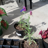 Gardening 2010, Part Three - 101_5036.JPG