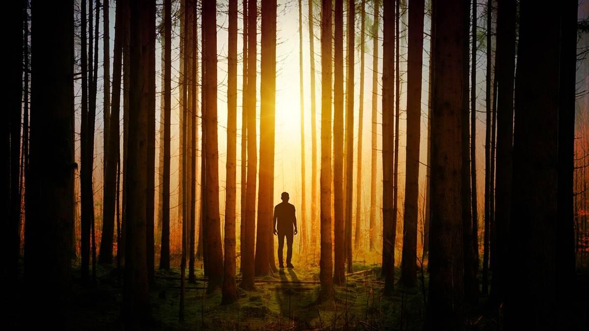 trong rừng cây, vây hãm