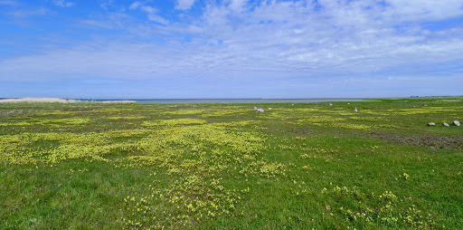2015-06-02 030_029(Gotland)c.jpg