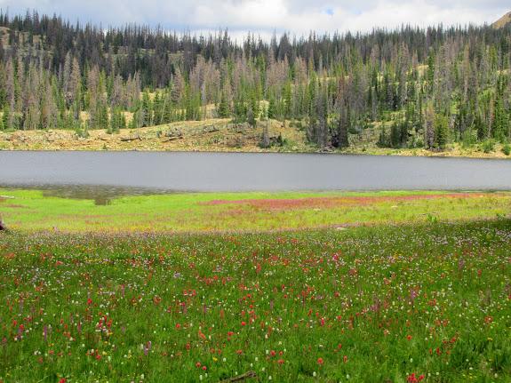 Wildflowers at Long Lake
