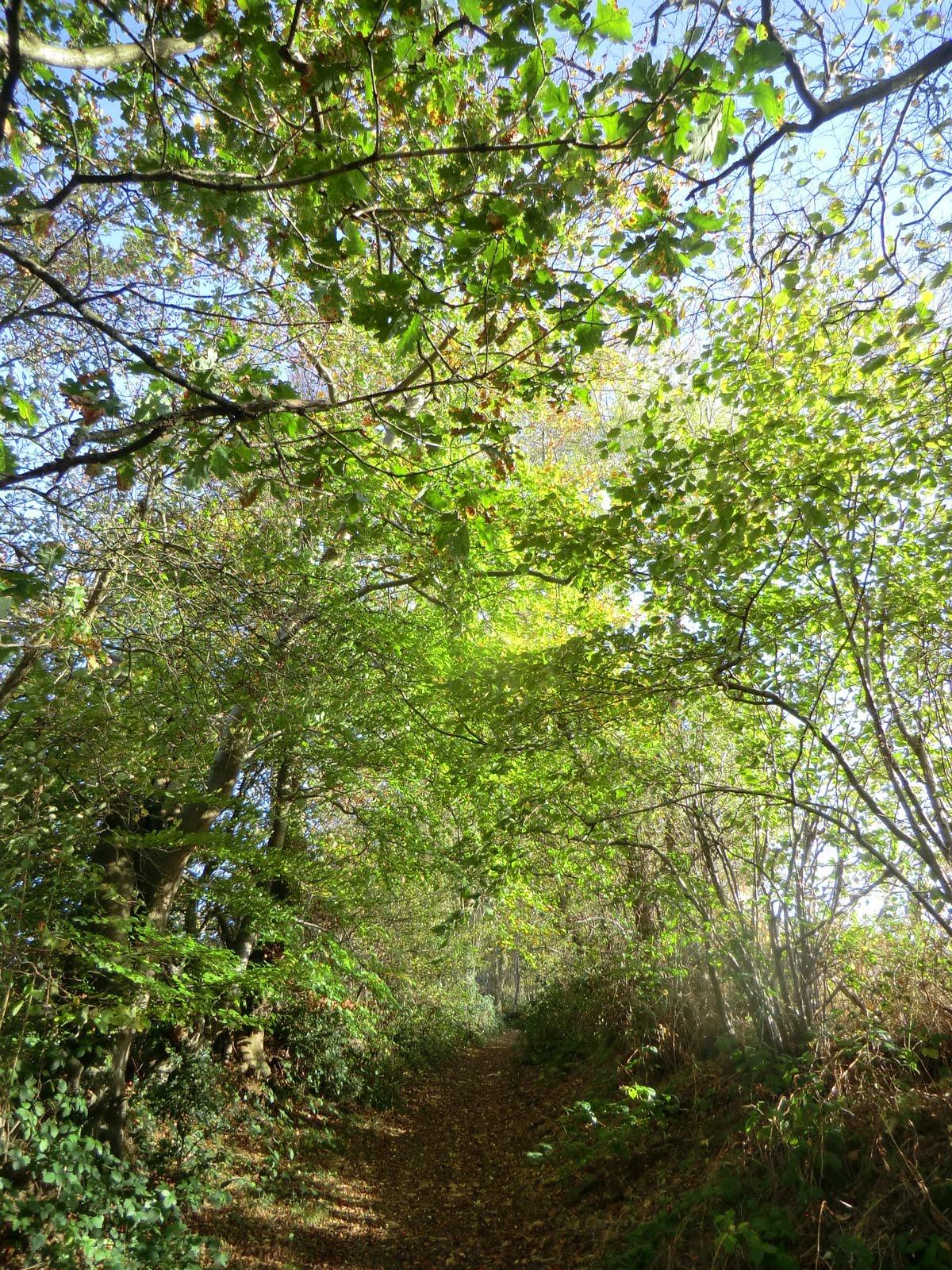 CIMG5612 Through Burrs Wood